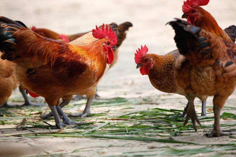 滴雞精文章-圖片3