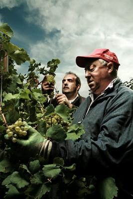 Harvest-01-Bisol-Photo-Fredi-Marcarini_resize