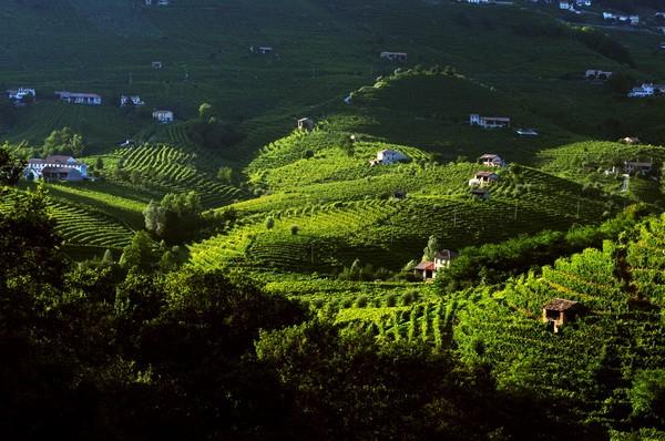 The-Prosecco-DOCG-hills-06-Photo-Francesco-Galifi_resize