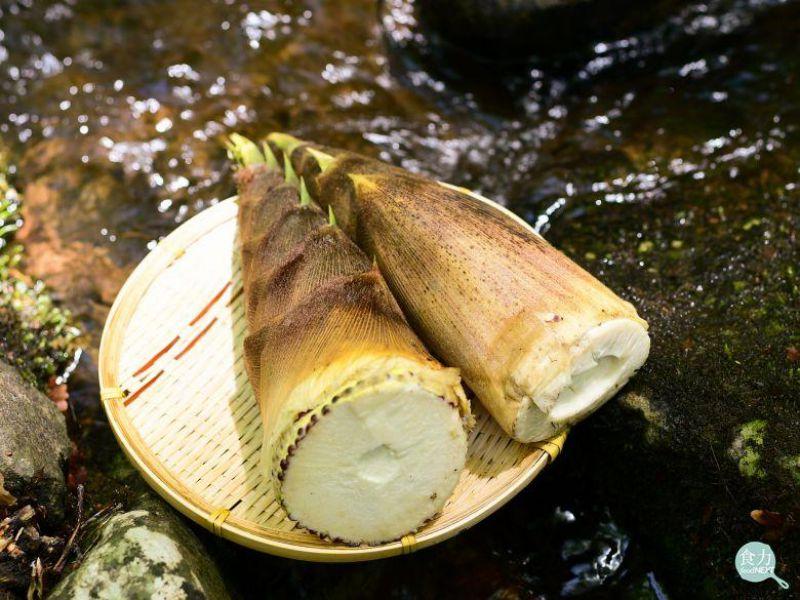 台灣到底有哪些竹筍種類?