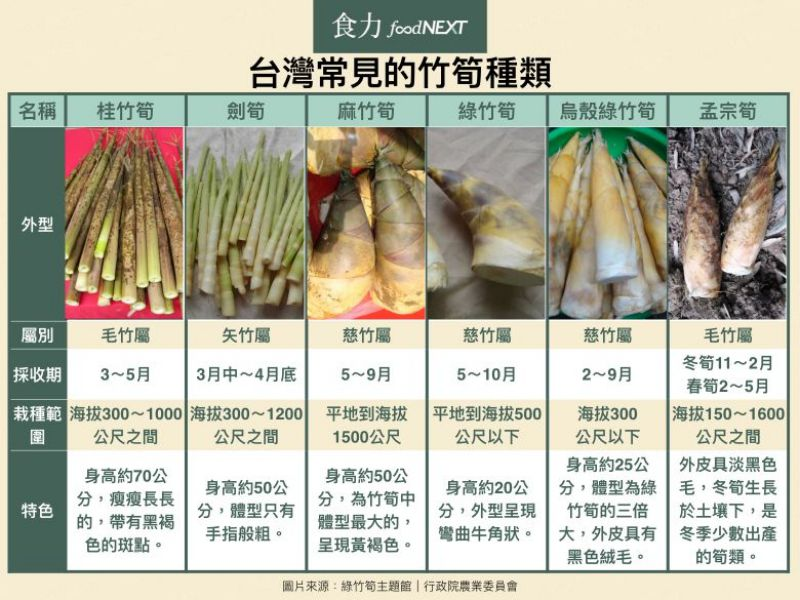 台灣常見的竹筍種類表